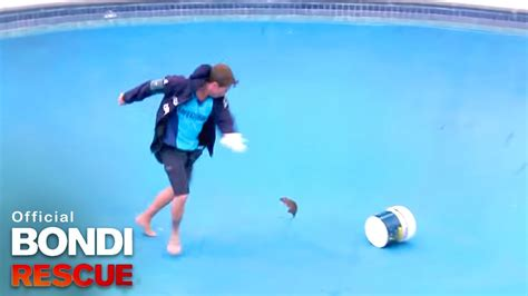 Rat tries to claw face off Bondi Lifeguard! - YouTube